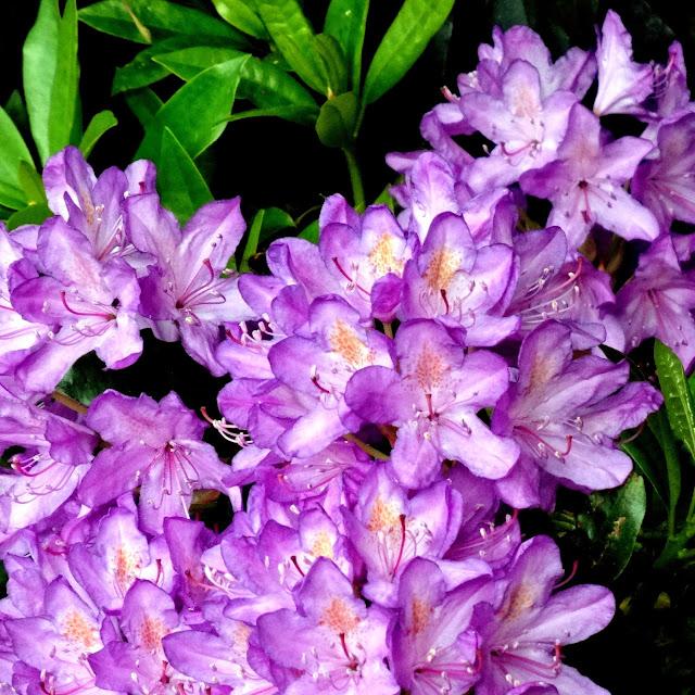 Flowers_fragnance