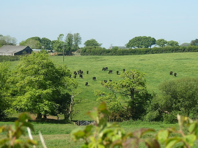 Cornwall's green countryside
