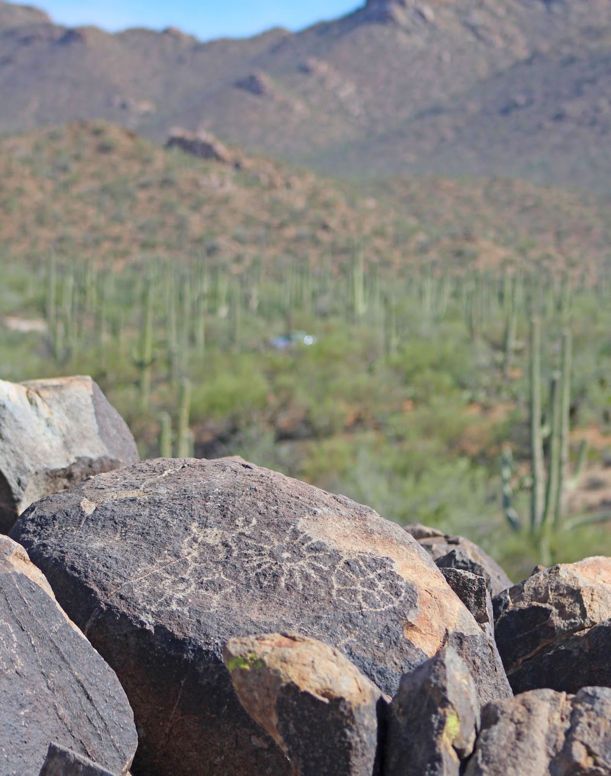 saguaro national park day trip 15
