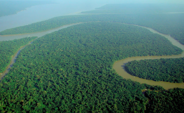 did you know facts about the amazon rainforest