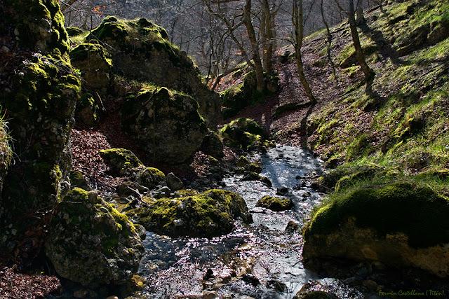 Paisaje de rocas, arroyo y bosque a contraluz