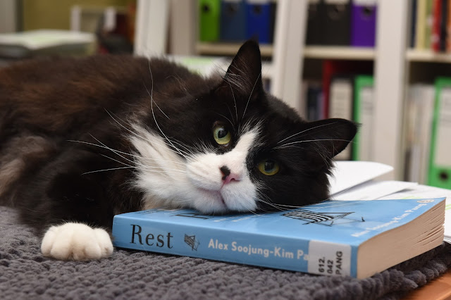 cat, rest, Alex Soojung-Kim Pang
