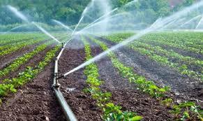 """Ανακοίνωση """"Πελοπόννησος Πρώτα"""" και """"Ανοιχτός Δήμος - Ενεργοί Πολίτες Καλαμάτας""""  για τη στήριξη των αγροτικών καλλιεργειών"""