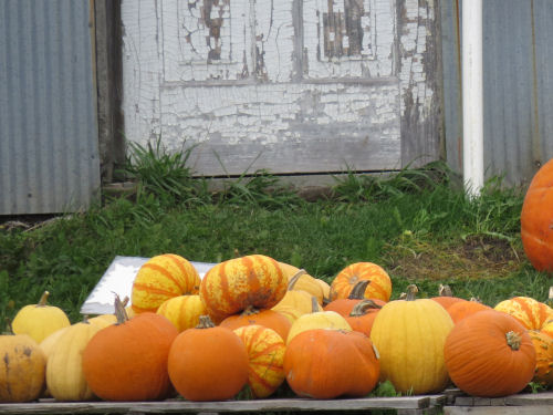pumpkins by an old door