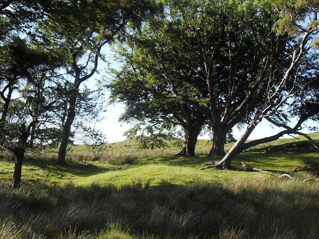 Muirshiel Country Park, Lochwinnoch via Panoramio.com - as seen on linenandlavender.net - http://www.linenandlavender.net/2012/01/scottish-rose.html