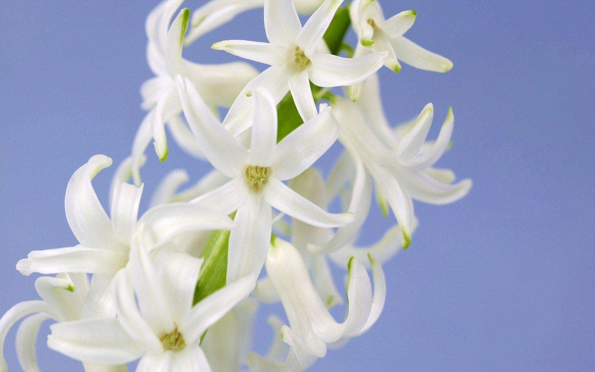 Wallpaper white flowers wallpapers for 3d white flower wallpaper