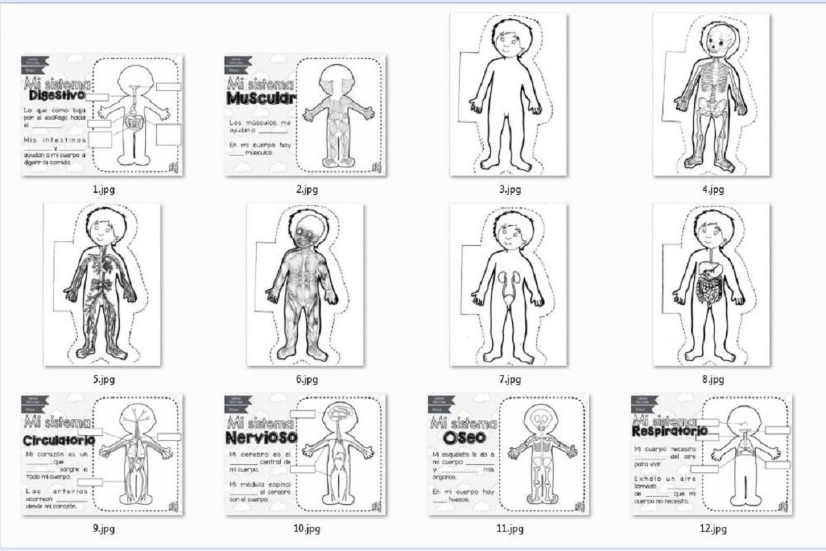 Sistemas del Cuerpo Humano para Recortar y Colorear | AULA VIRTUAL ...