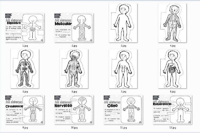 imprimir,primaria,dibujos,infantil,escuela