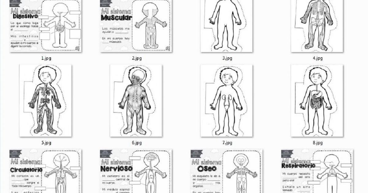 Sistemas del Cuerpo Humano para Recortar y Colorear   AULA VIRTUAL ...