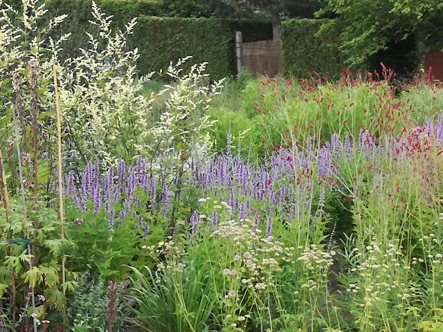 rabata preriowa, perennial border, trawy w ogrodzie