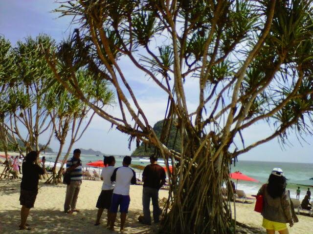 Mangrove di Pulau Merah.