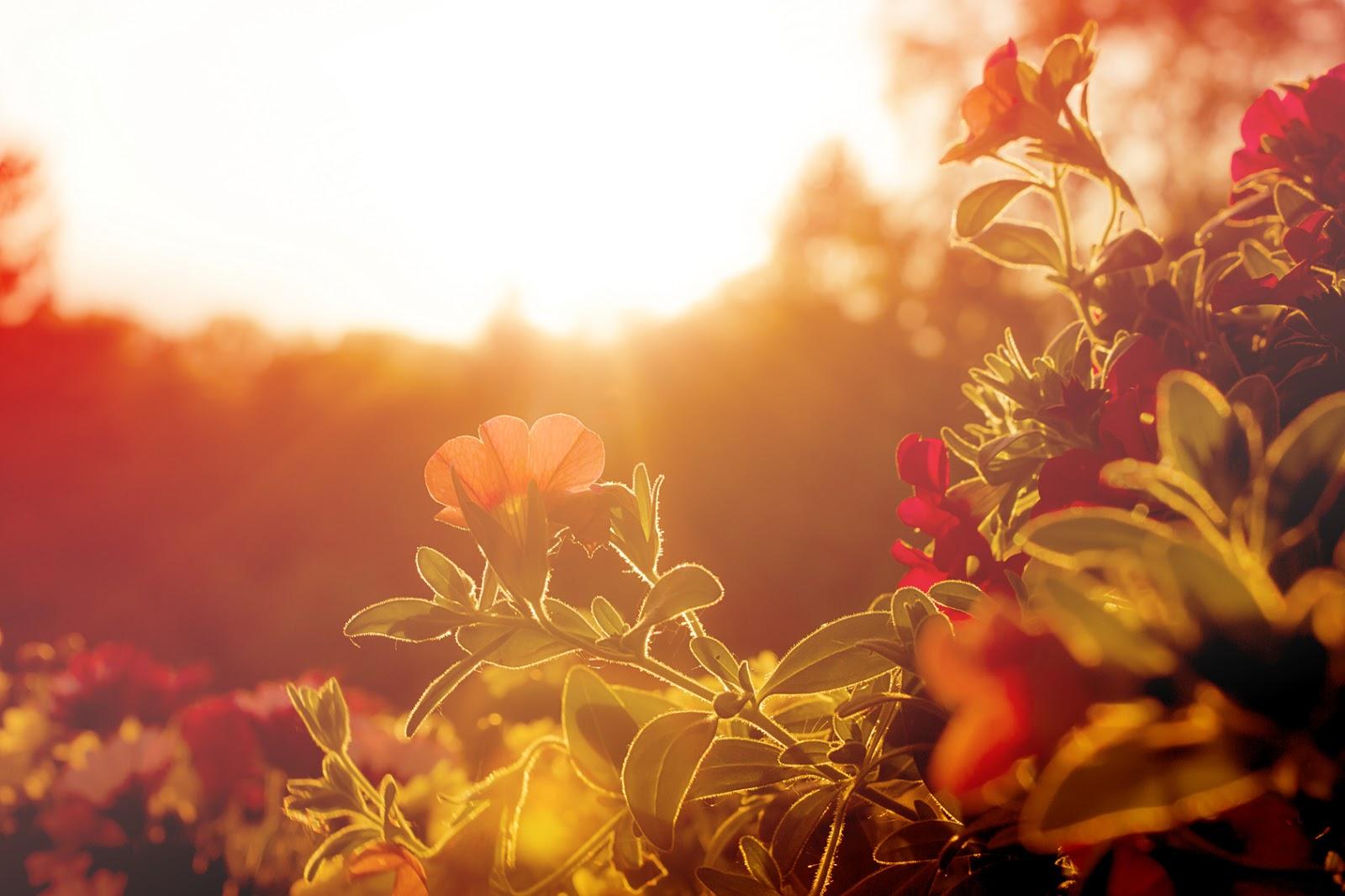 Mon Jardin En Avril conso-collab: astuces jardinage : faites revivre votre