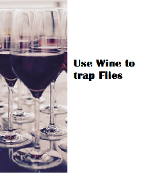 Use Wine to trap Flies