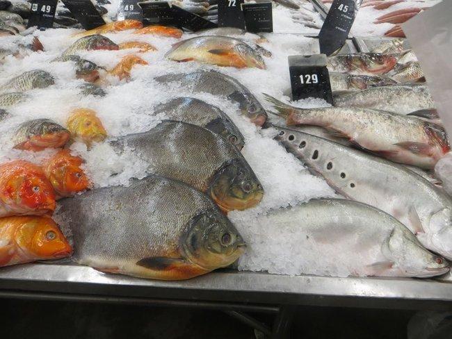 различная рыба в макро