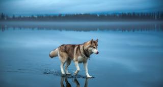 20 από τις καλύτερες φωτογραφίες από το αρχείο του National Geographic