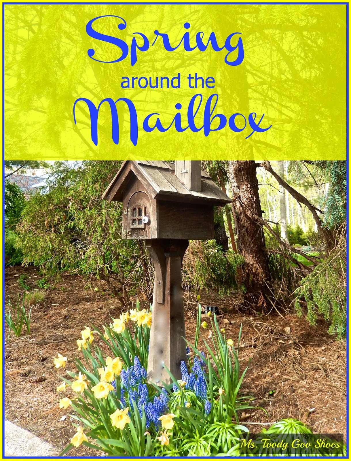 Spring Around The Mailbox: Daffodils & Purple Grape Hyacinths are a perfect combo   --- Ms. Toody Goo Shoes