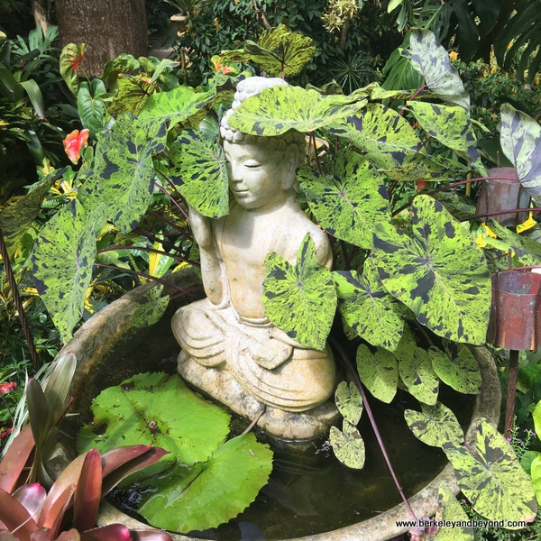 water garden with Buddha at Hunte's Gardens in Barbados