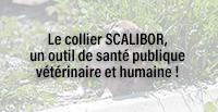 Le collier SCALIBOR®, un outil de santé publique vétérinaire et humaine !