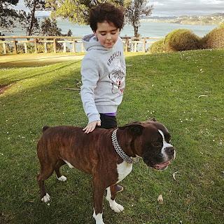 razas de perro para niños, boxer