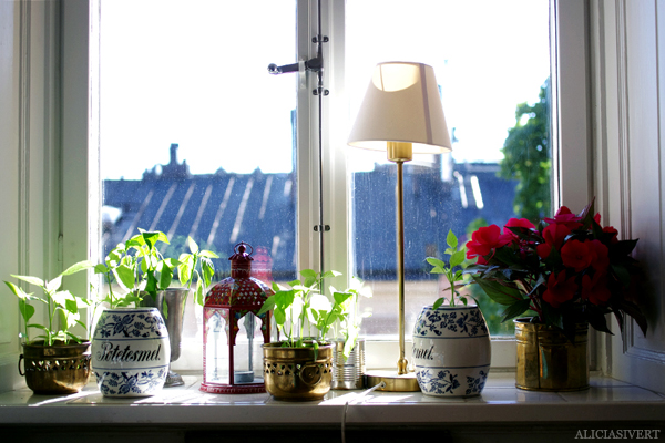 aliciasivert, alicia sivert, alicia sivertsson, odling, plantera, ekologisk paprika, paprikafrön, änglamarks ekologiska odlingsjord, kruka, skott, planta, plantor, paprikaplantor, fönster, plant, flowers, flower, sweet peppers
