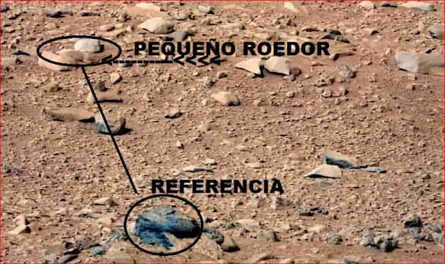 Roedor. Otra evidencia de que hay vida en Marte