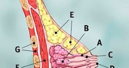 Cara Mengetahui Kanker Payudara Sejak Dini | DR Warta