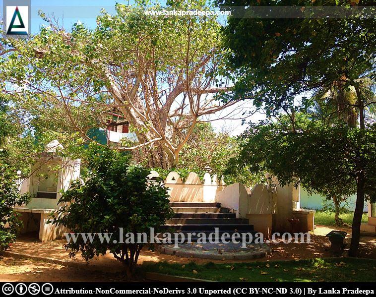 The Bodhi-tree, Galkissa Samudrasanna temple