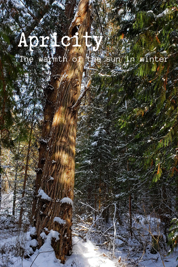tree in snowy landscape with sunshine from www.ruralmag.com