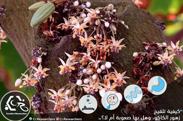 مشكلات تلقيح أزهار الكاكو