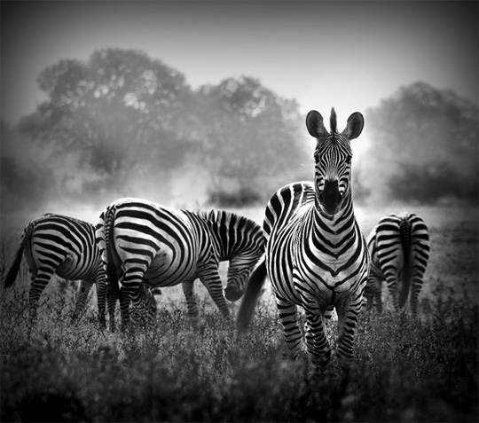 Black And White Nature Photography Wallpapers