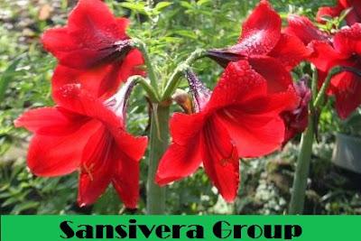pohon-bakung-bunga-merah-airmancur