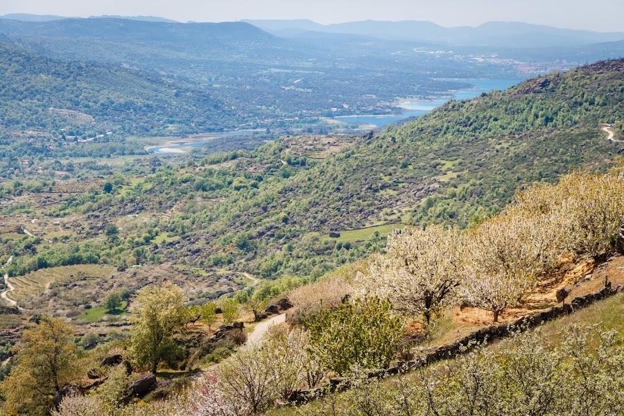El Valle del Jerte en floración