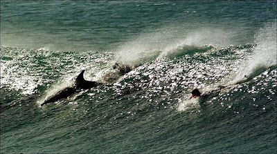 Jeffrey's Bay Dolphins
