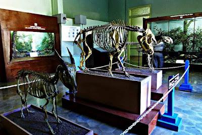Harga Tiket Masuk Museum Zoologi Bogor Terbaru