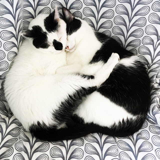 black and white cats, rescue cats, adopt don't shop, Anne Butera, My Giant Strawberry