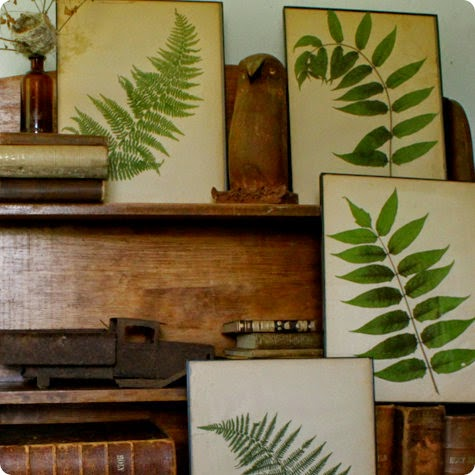 Eye For Design Decorate With Fern Decor For Trendy Interiors
