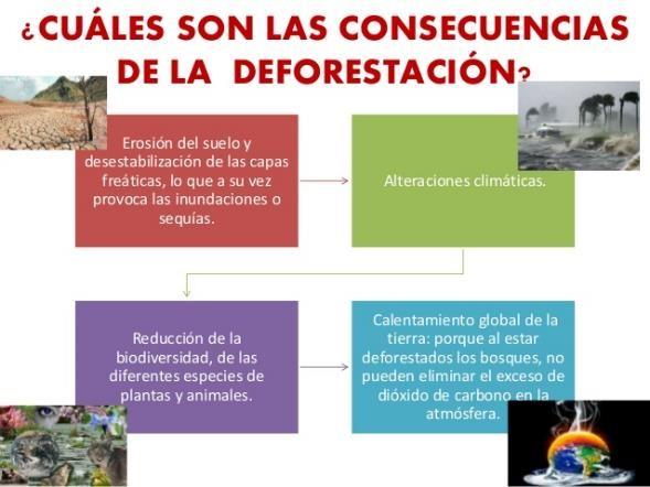 consecuencias deforestacion