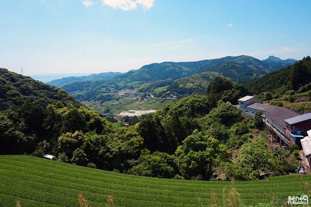茶畑、東彼杵町、長崎県