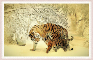 Animal Pictures For Kids