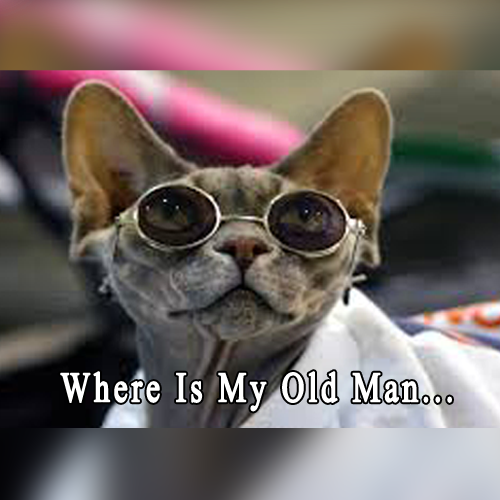 Must Share Dude: Where Is My Old Man | Funny Dogs | Plumbing Pictures
