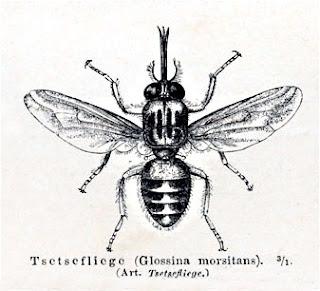Jenis-Jenis Arthropoda Patogen (Sikilus Hidup, Gejala Klinis, Pencegahan & Pengobatan)
