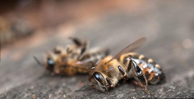 Δημόσια διαβούλευση για την αναστολή της μείωσης των μελισσών