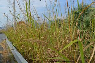 Ταμπέλες μέσα σε αγριόχορτα... (πρώτη δημοσίευση 29/8/17)