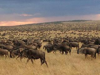 Masai Mara safari to see wildebeest migration