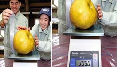 Pear Terbesar Di Dunia