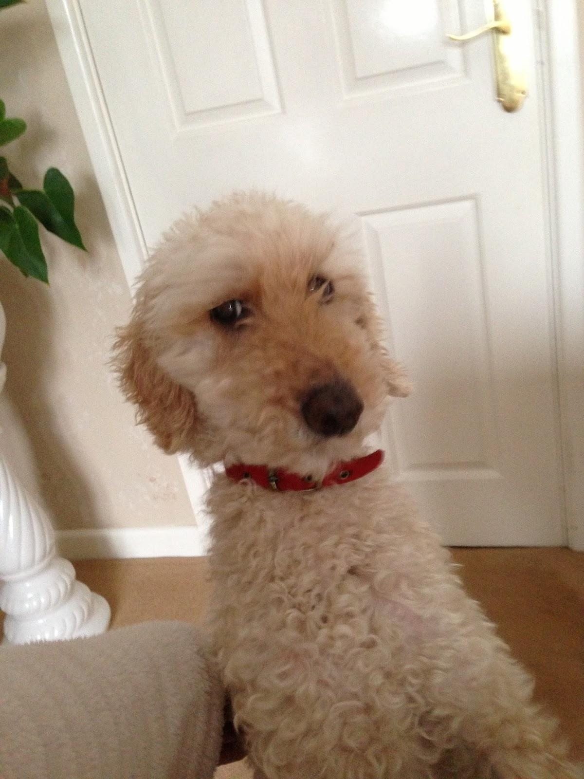 Doggy Dissertation Topic?