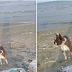 Η Λάρνακα όρισε την χειρότερη παραλία για τους σκύλους...