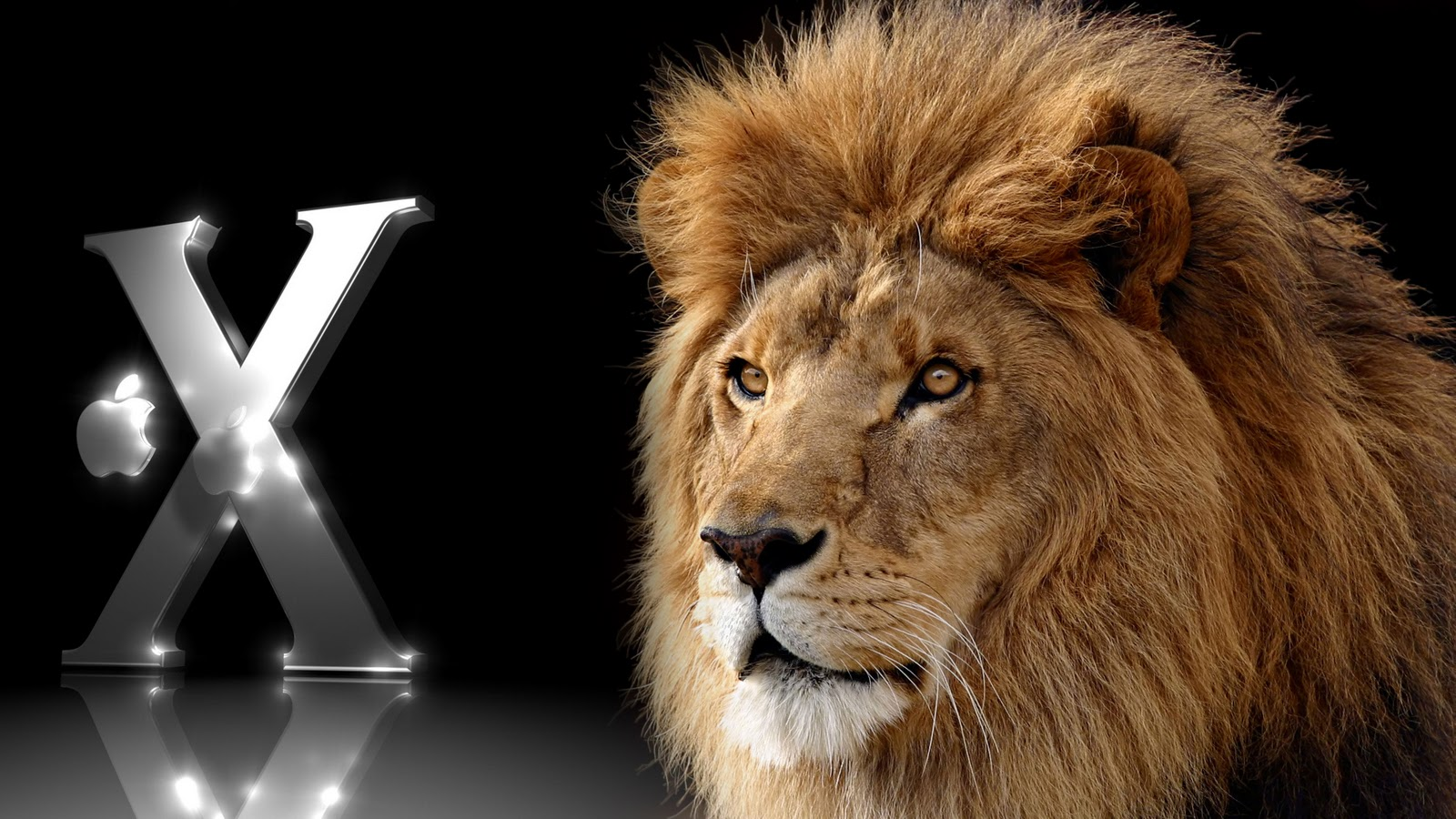 Funny Image Collection: Rasta Lion layouts & backgrounds created by CoolChasers!