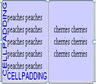 Cell-Padding-image