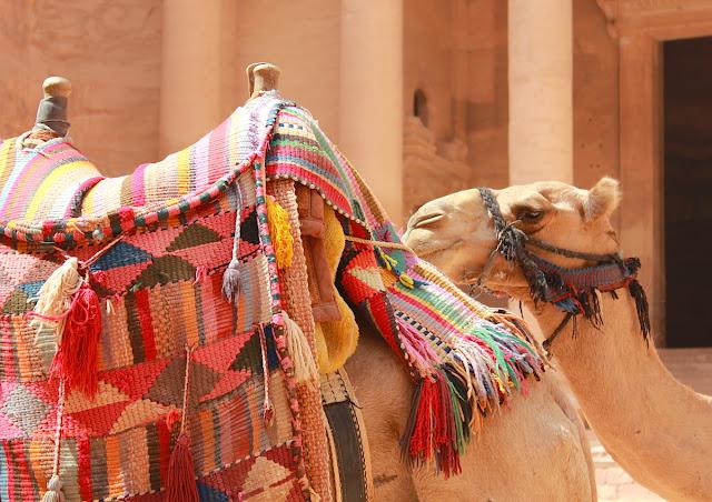I cammelli di Petra - foto di Elisa Chisana Hoshi